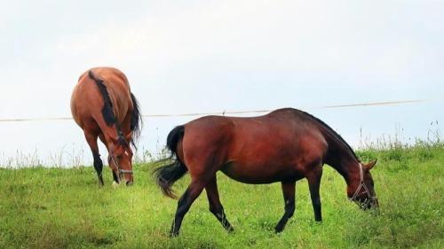 圖集 白俄羅斯:退役賽馬「養老院」