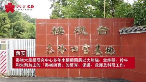 探訪秦嶺大熊貓研究中心 二十載育大熊貓20胎23仔