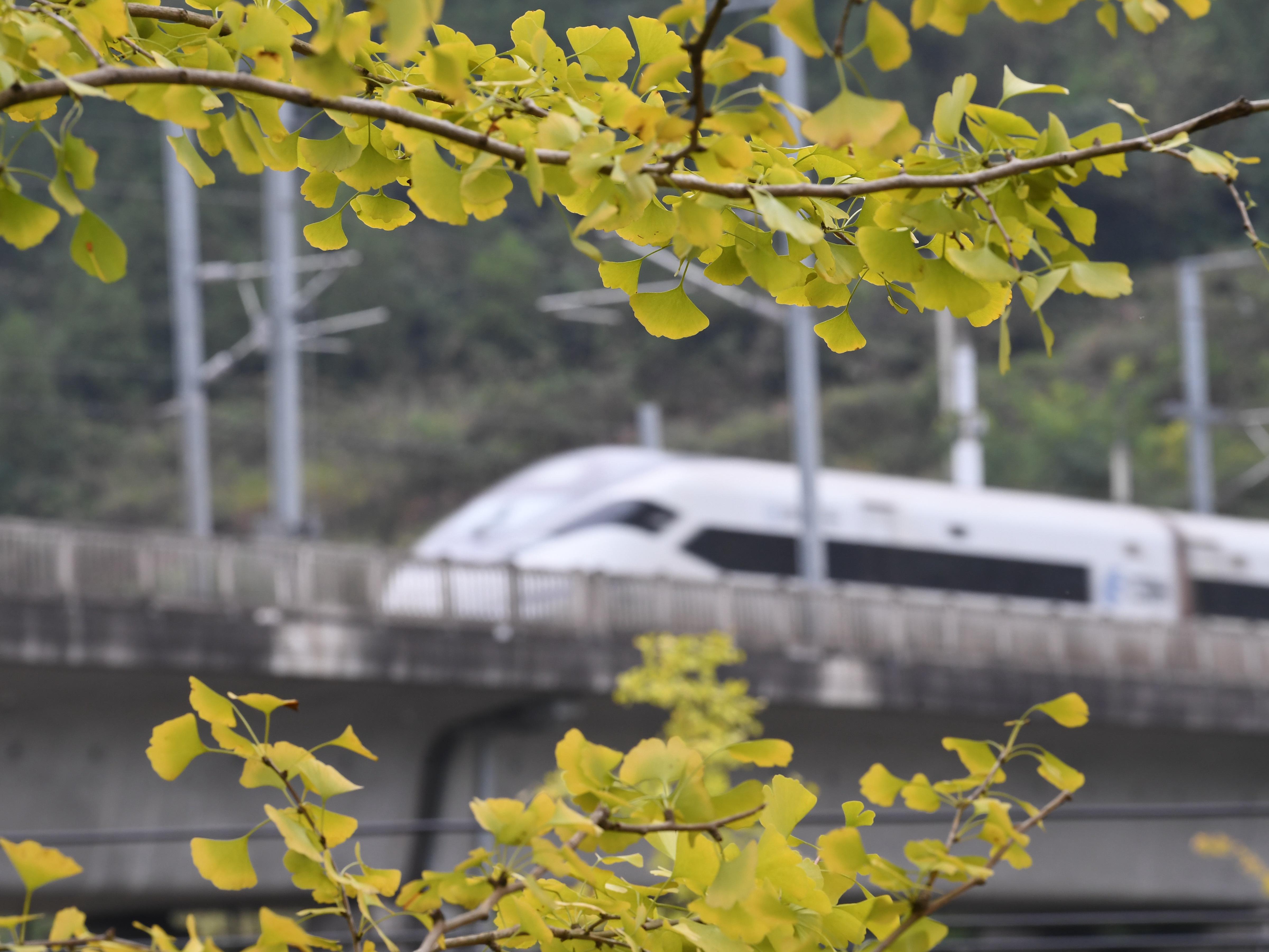 10月10日,一列動車組列車行駛在貴州省凱里市境內。新華社