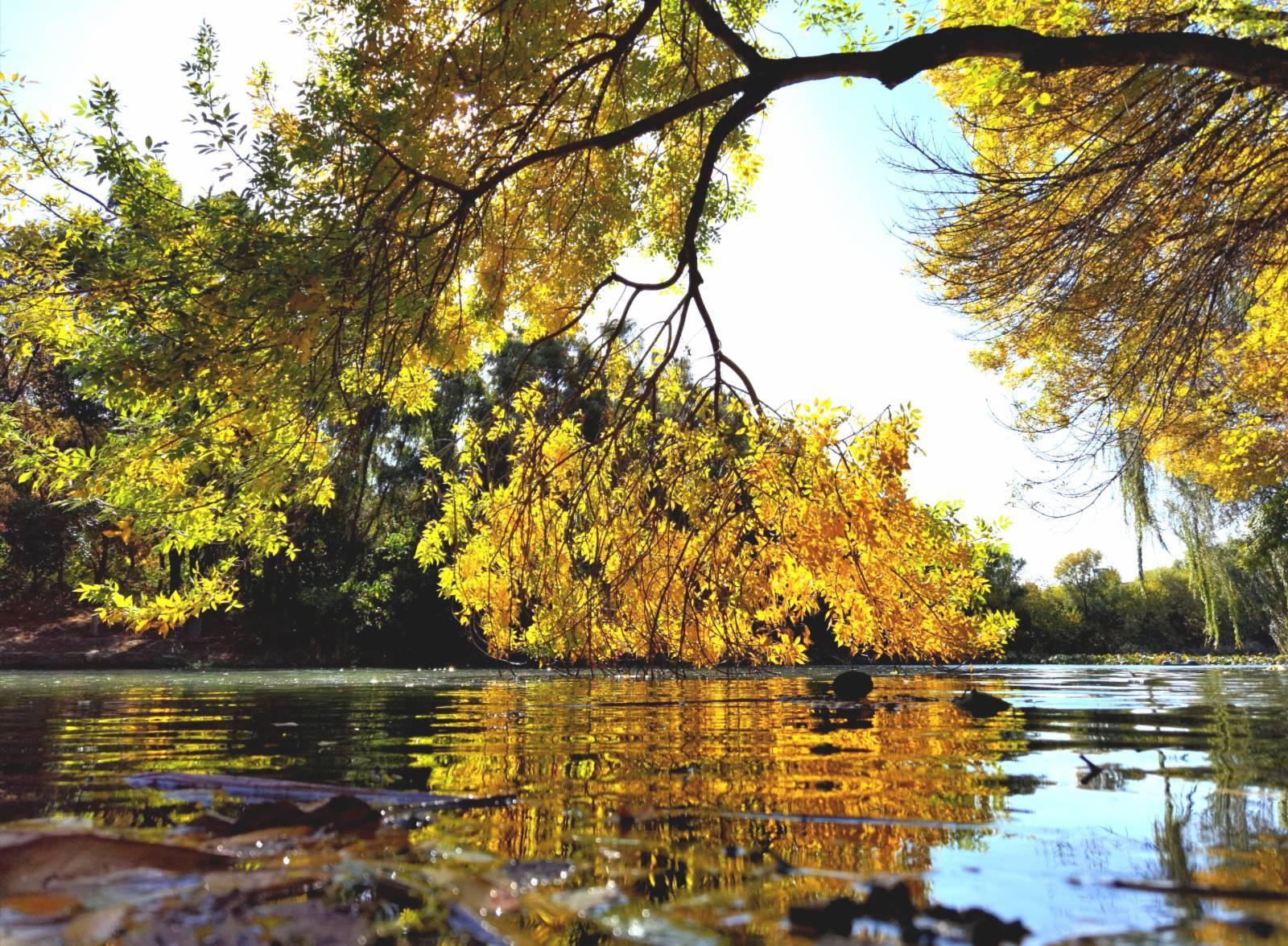 10月22日,北京奧林匹克森林公園秋景。(新華社)