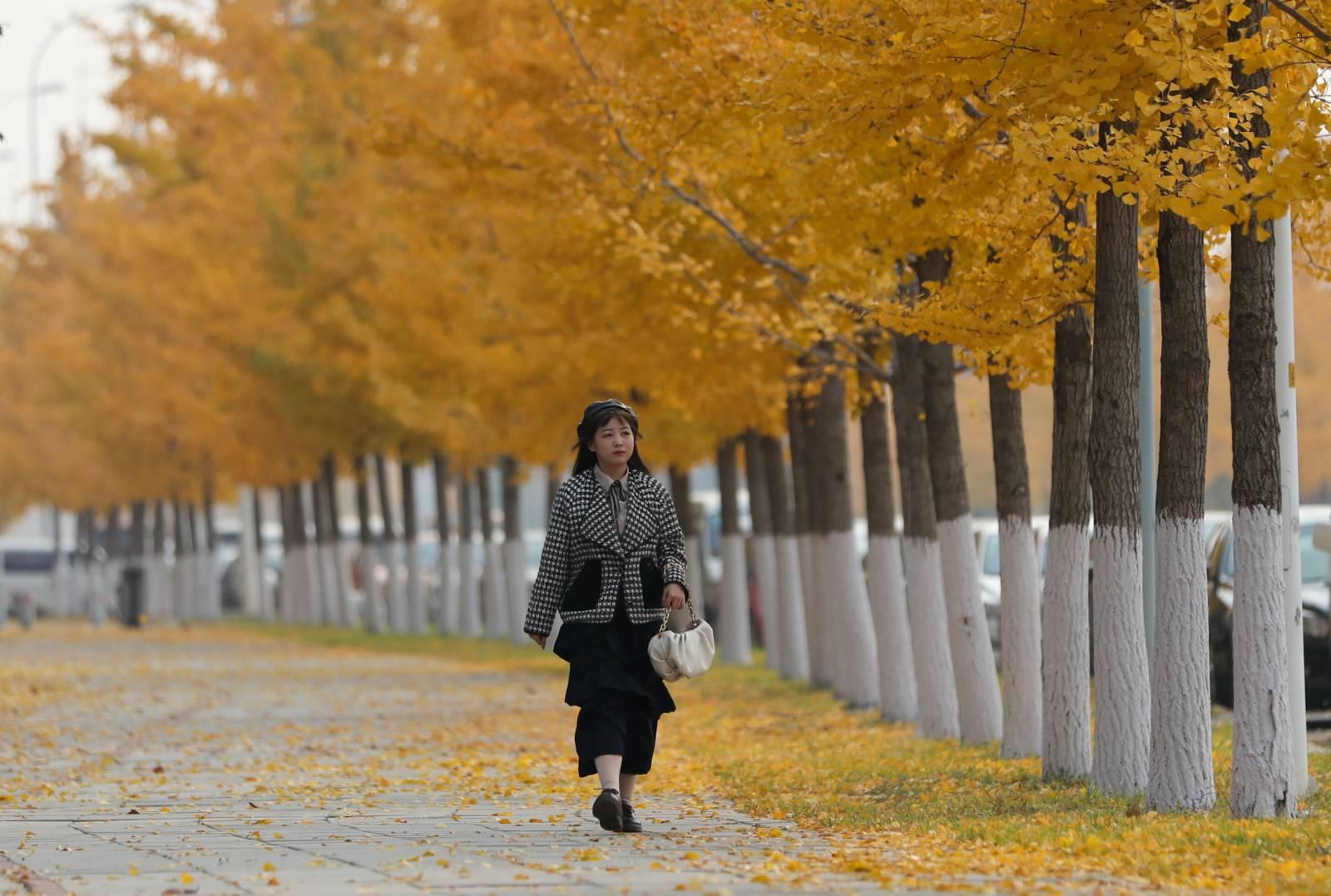 10月26日,市民行走在秋色迷人的瀋陽街頭。(中新社)