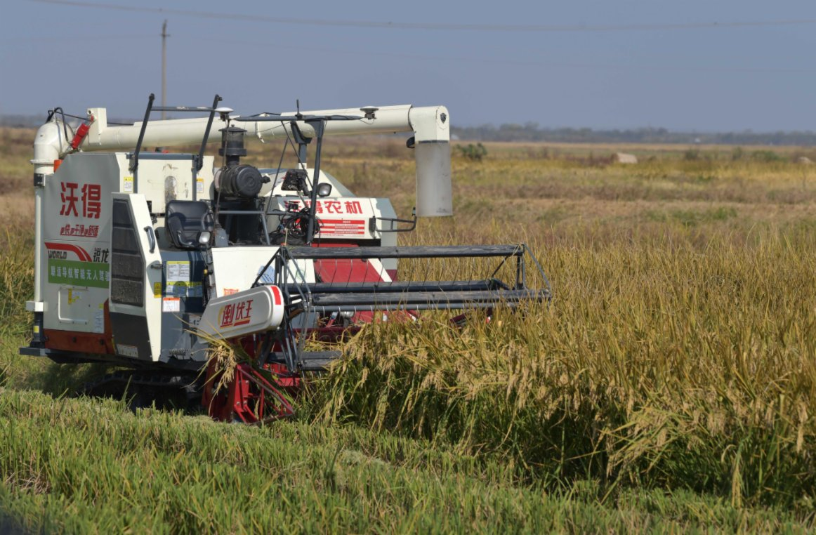 11月14日,在江西省南昌縣蔣巷鎮大田農社智慧農場,無人收割機在現場演示水稻收割。(新華社)