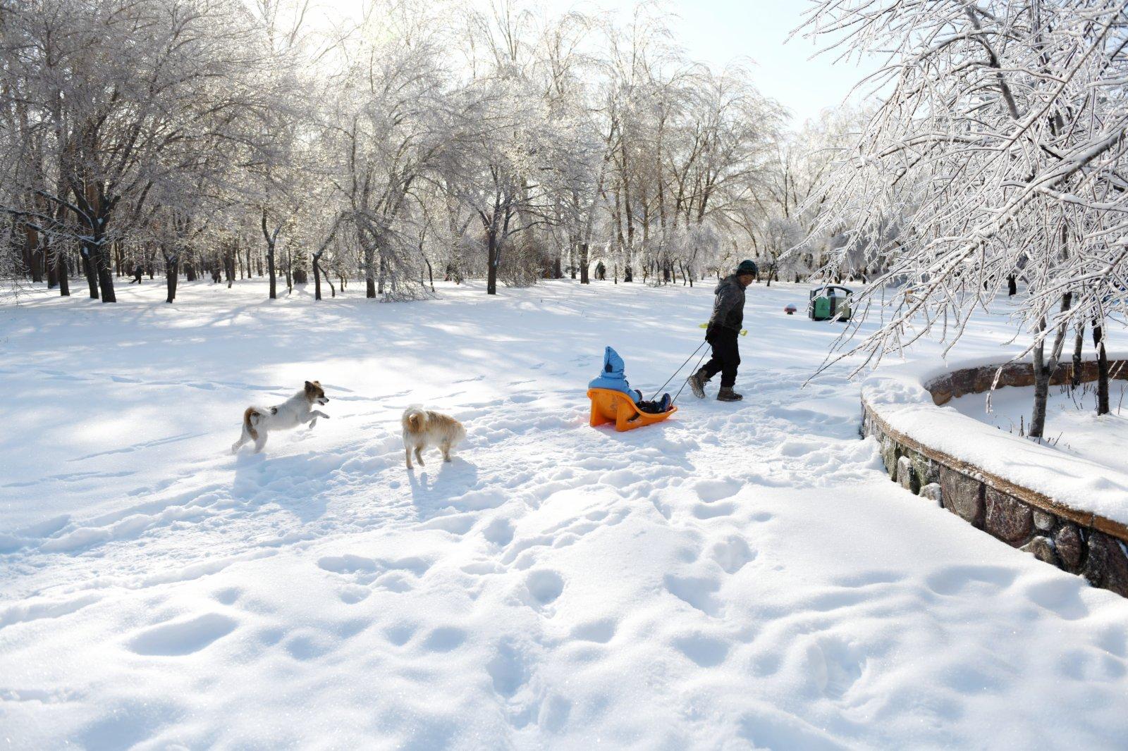 11月20日,在吉林省長春市,遊人在公園內遊玩。