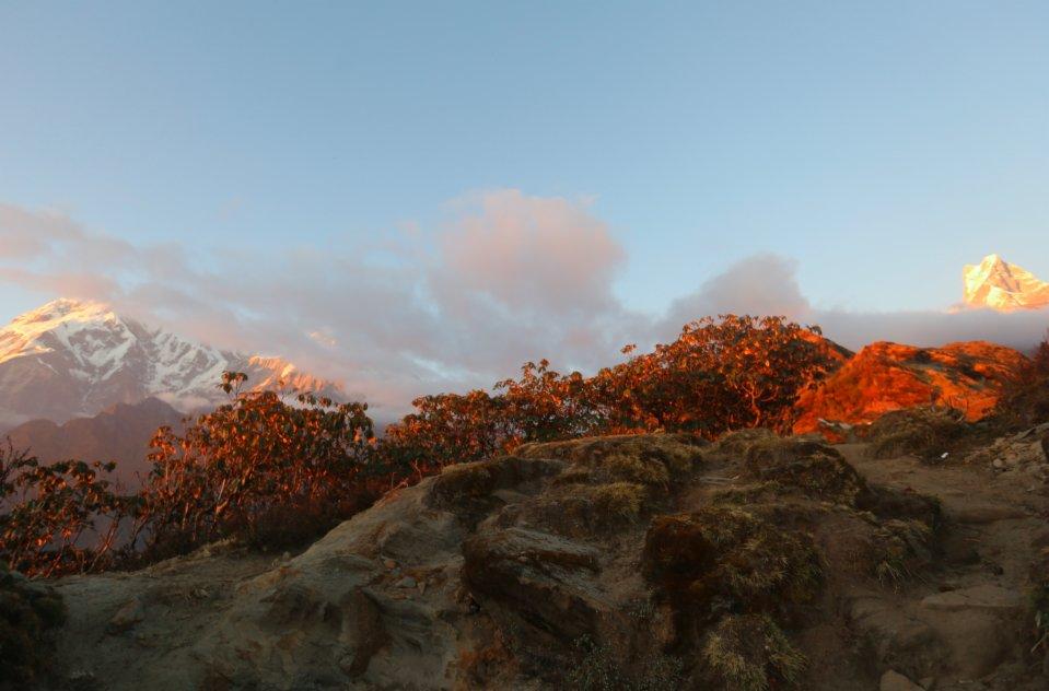 這是11月10日在尼泊爾安納布爾納地區拍攝的夕陽下的矮樹林。(新華社)