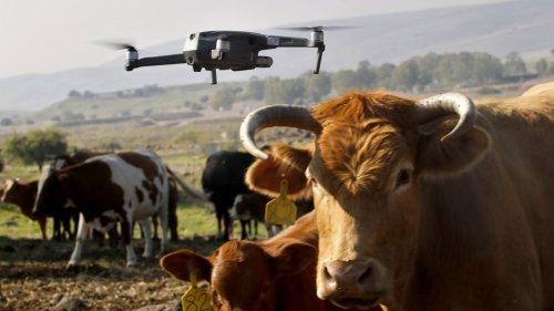 戈蘭高地上放牛的「無人機」