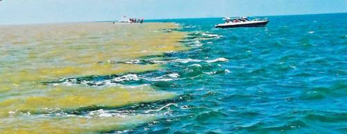 【大地遊走】中國四大河流行︰黃河篇黃河入海口
