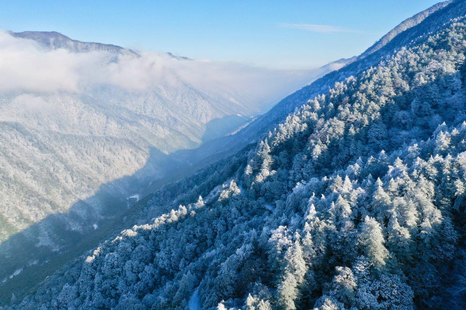 1月8日,武夷山國家公園腹地的桐木關附近,群山雲霧繚繞(無人機照片)。