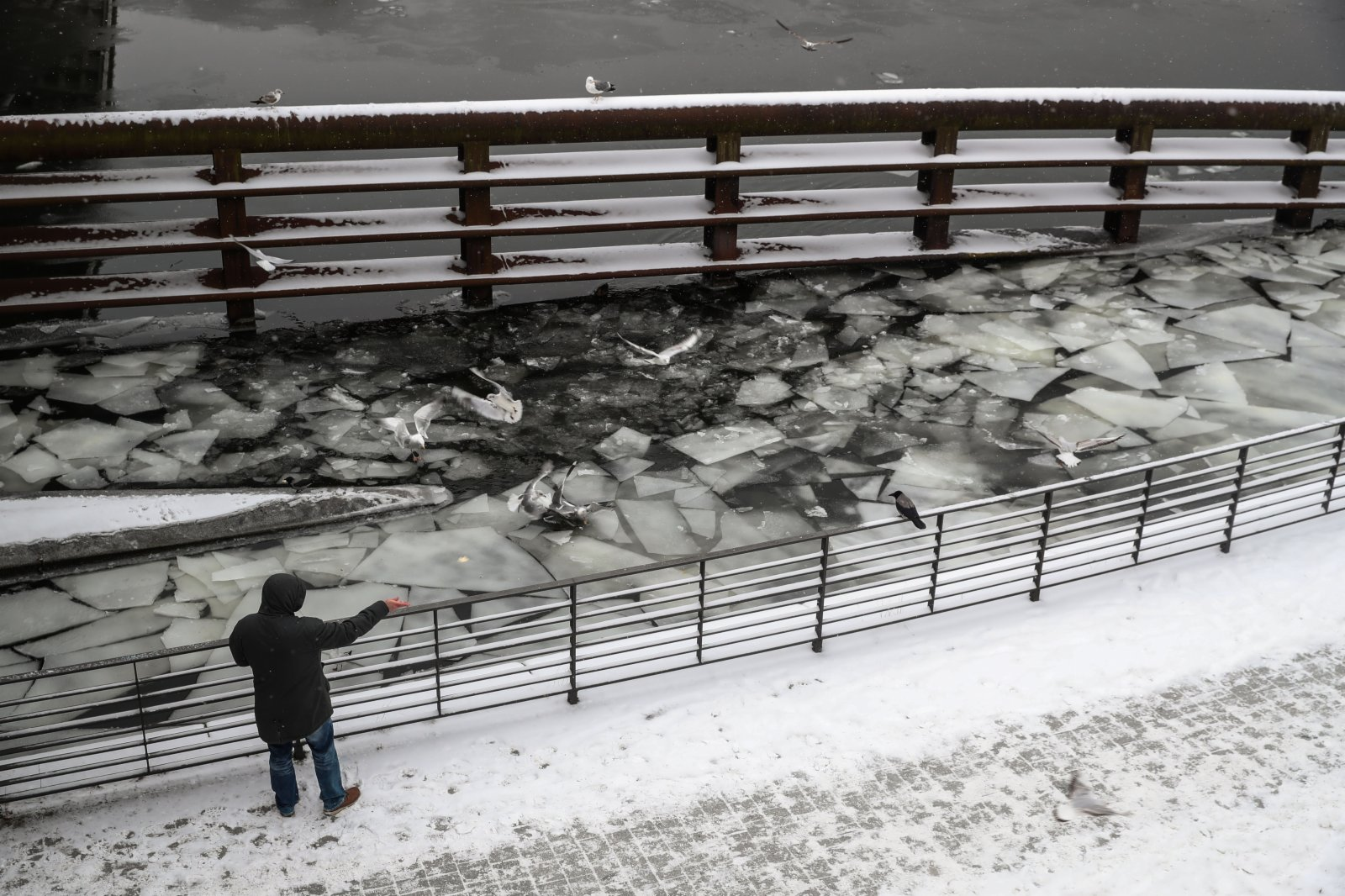 2月9日,一名男子在德國首都柏林施普雷河畔喂鳥。(新華社)