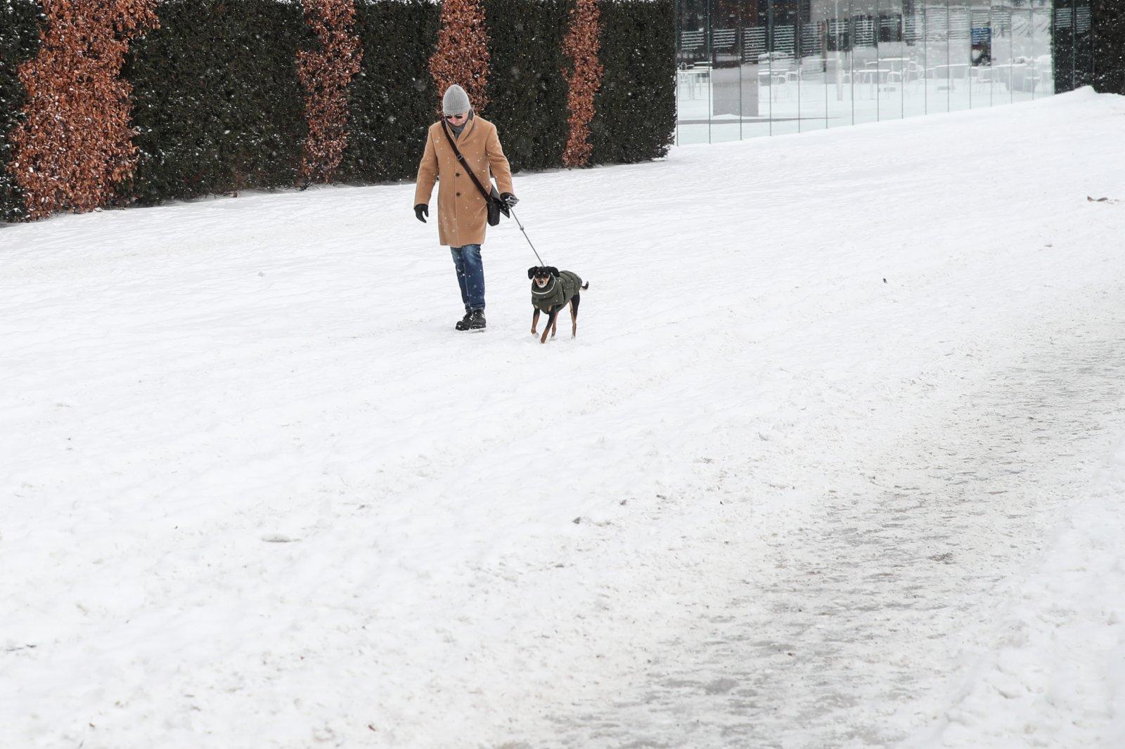 2月9日,在德國首都柏林,一名男子在雪中遛狗。(新華社)