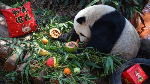 海口:動物享美食迎元宵節