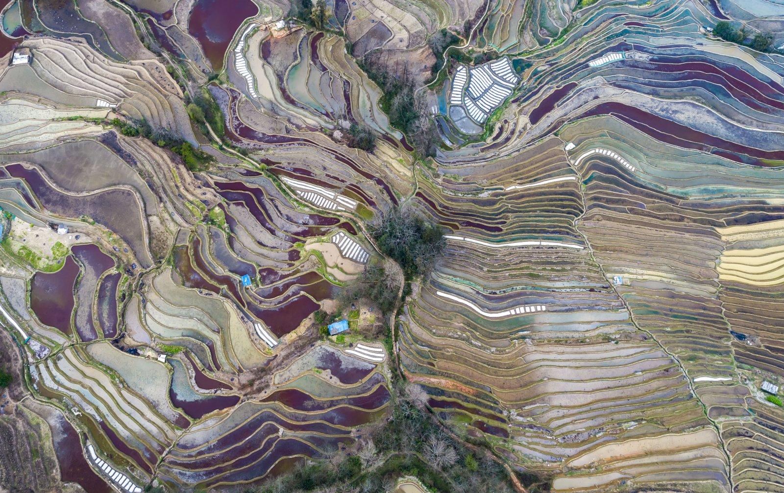 這是哈尼梯田景觀。