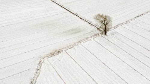 春·雪·景
