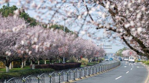 春景繁花秀