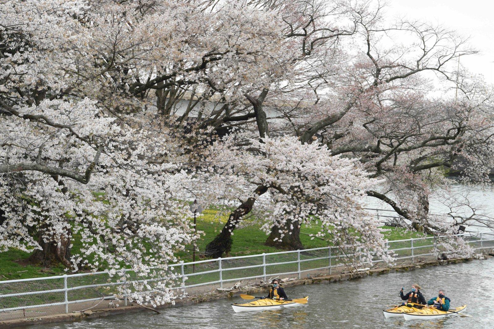 圖為3月31日拍攝的潮汐湖。 中新社