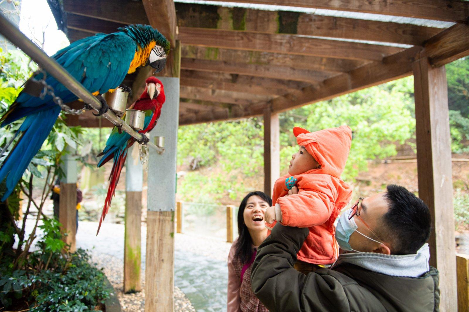 4月3日,遊客在長沙生態動物園和鸚鵡互動。(新華社)