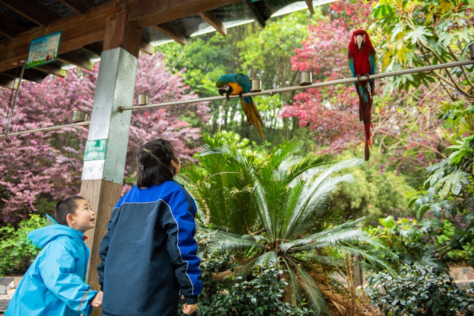 4月3日,兩位小朋友在長沙生態動物園觀察鸚鵡。(新華社)