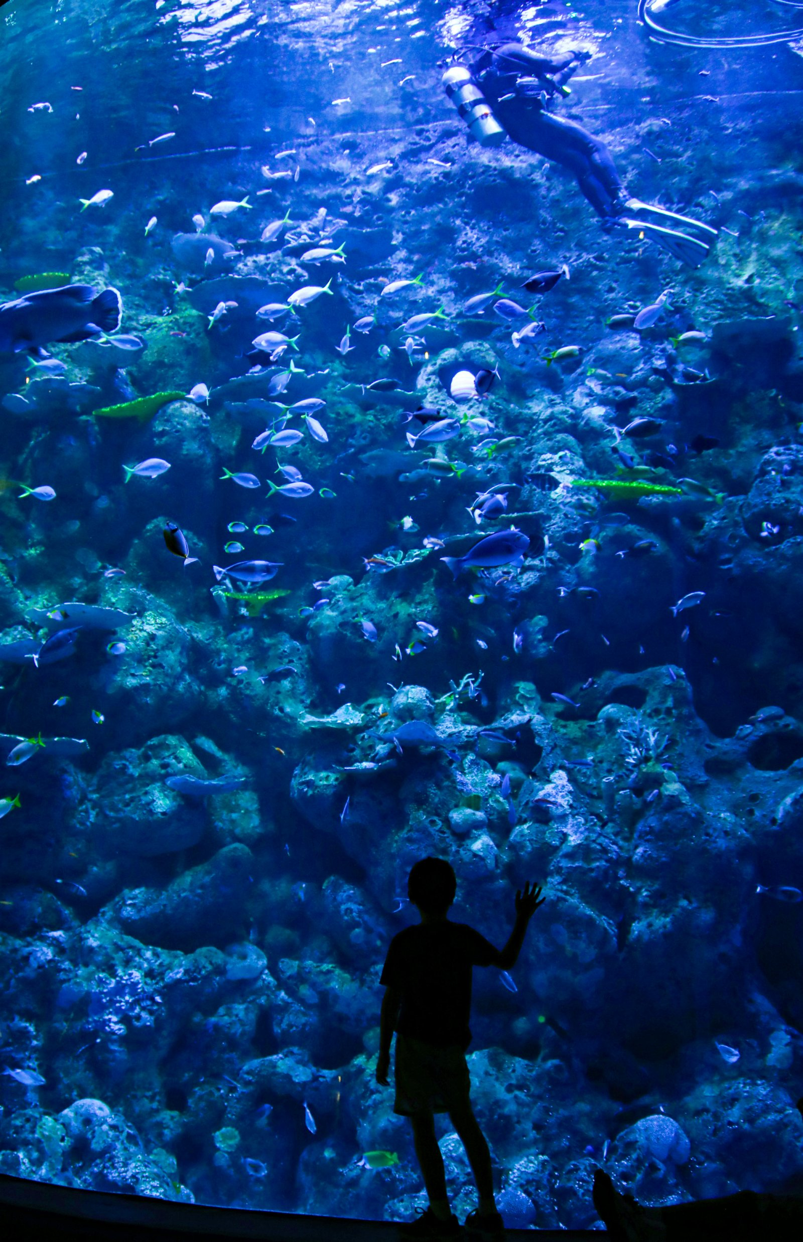 4月1日,遊客在澳大利亞凱恩斯參觀水族館。(新華社)