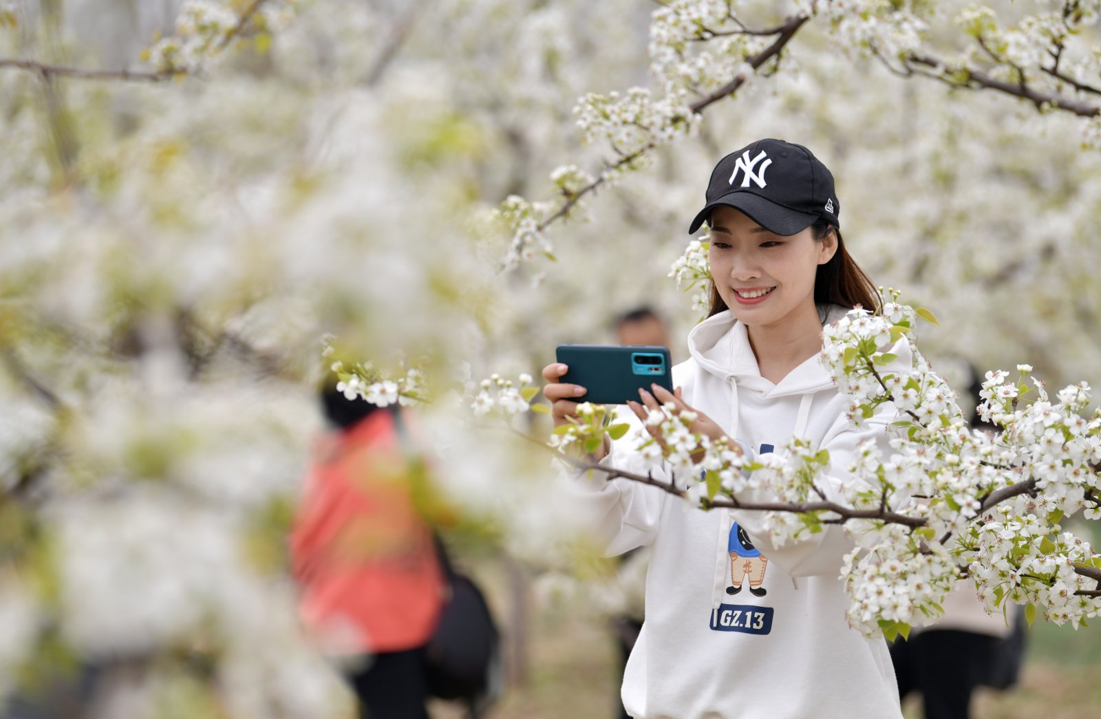 4月11日,遊客在園區內拍攝梨花。(新華社)