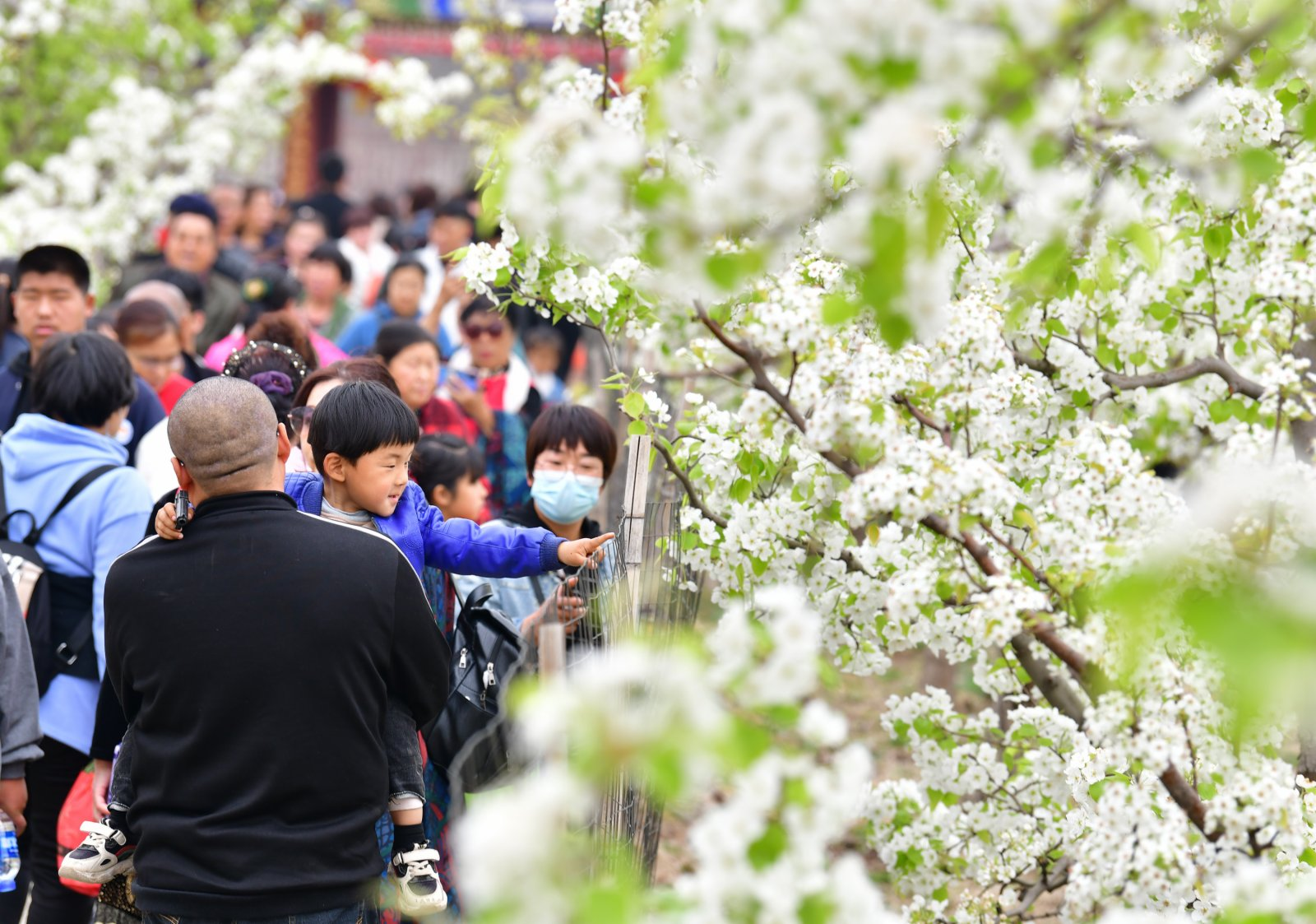 4月11日,遊客在楊家坡民俗文化園內賞花遊玩。(新華社)