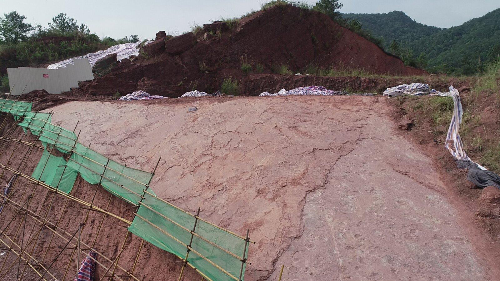 這是恐龍足跡化石的地形。(新華社)