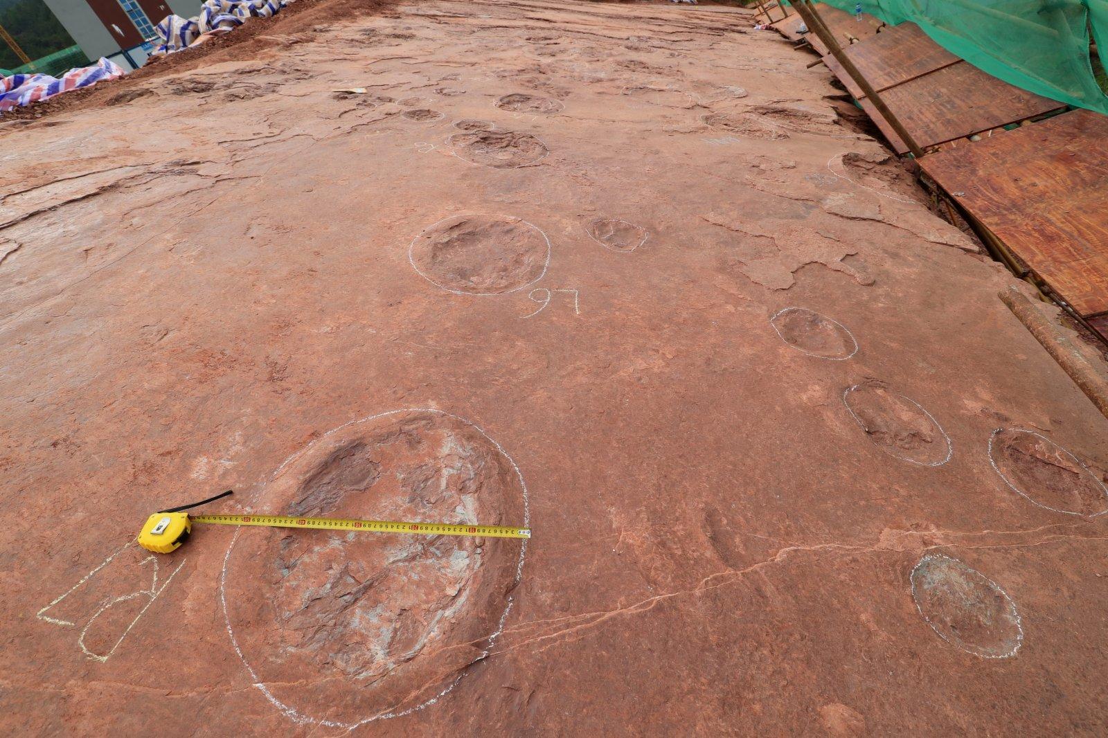 這是新發現的大型蜥腳類恐龍足跡化石。(新華社)