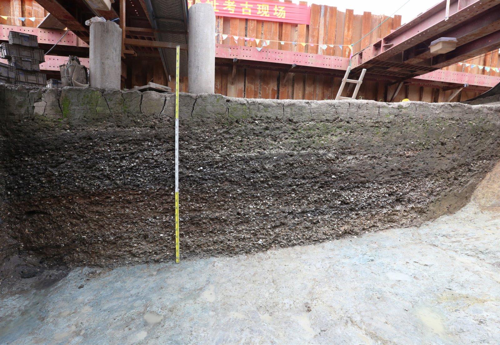 浙江寧波餘姚井頭山遺址以貝殼為主要包含物的文化堆積(資料照片)。