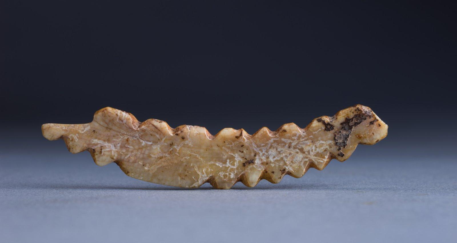 河南省鞏義市河洛鎮雙槐樹遺址出土的「牙雕家蠶」(資料照片)。
