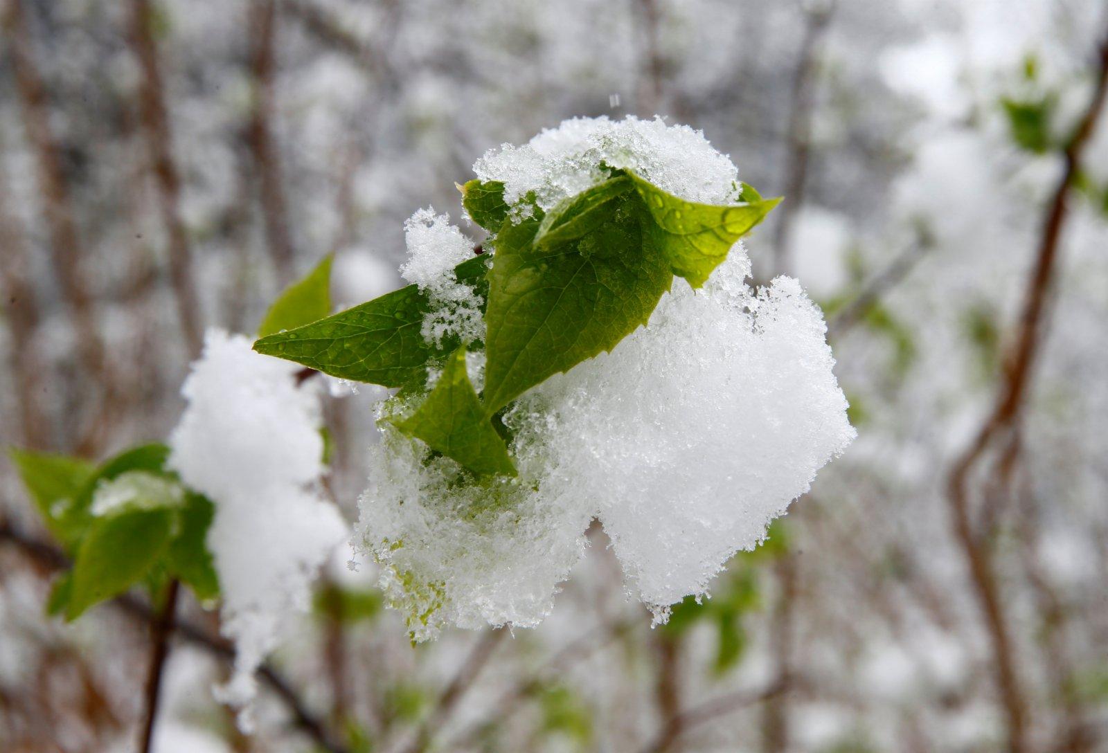 圖為街邊的葉子雪覆蓋。(路透社)