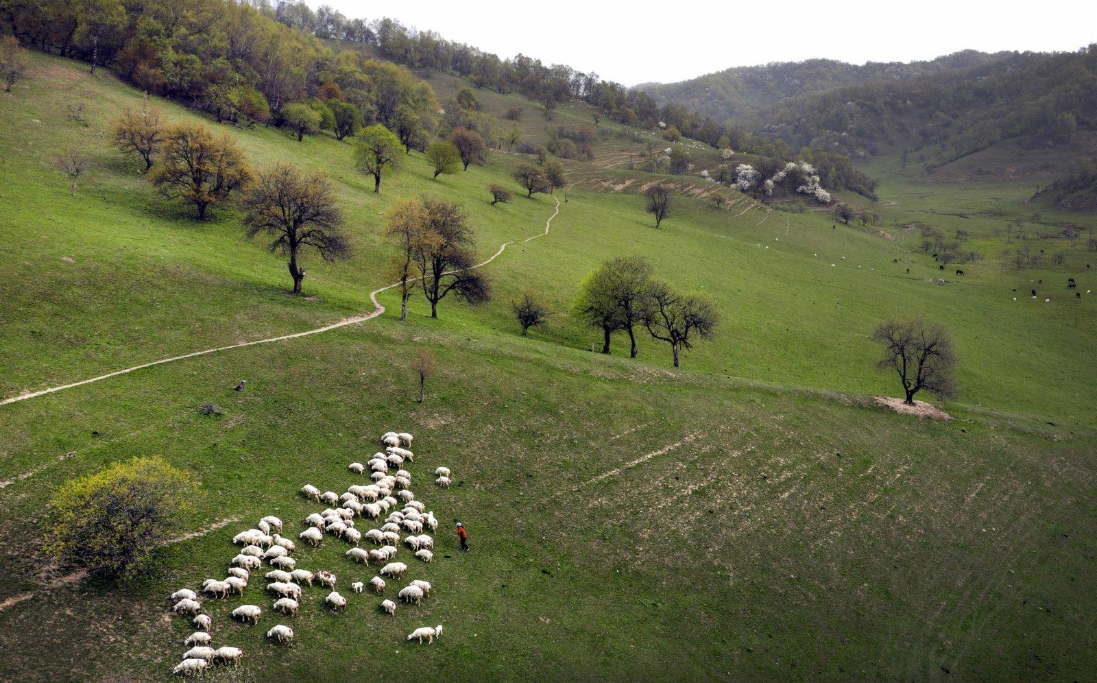 5月4日拍攝的隴縣關山草原旅遊風景區一角(無人機照片)。(新華社)