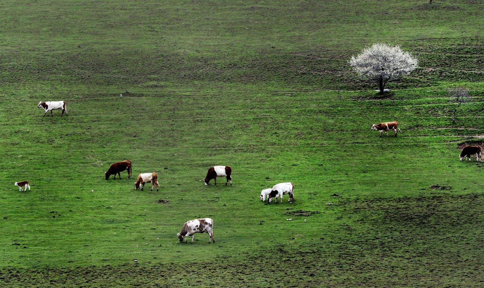 5月4日拍攝的隴縣關山草原旅遊風景區一角。(新華社)