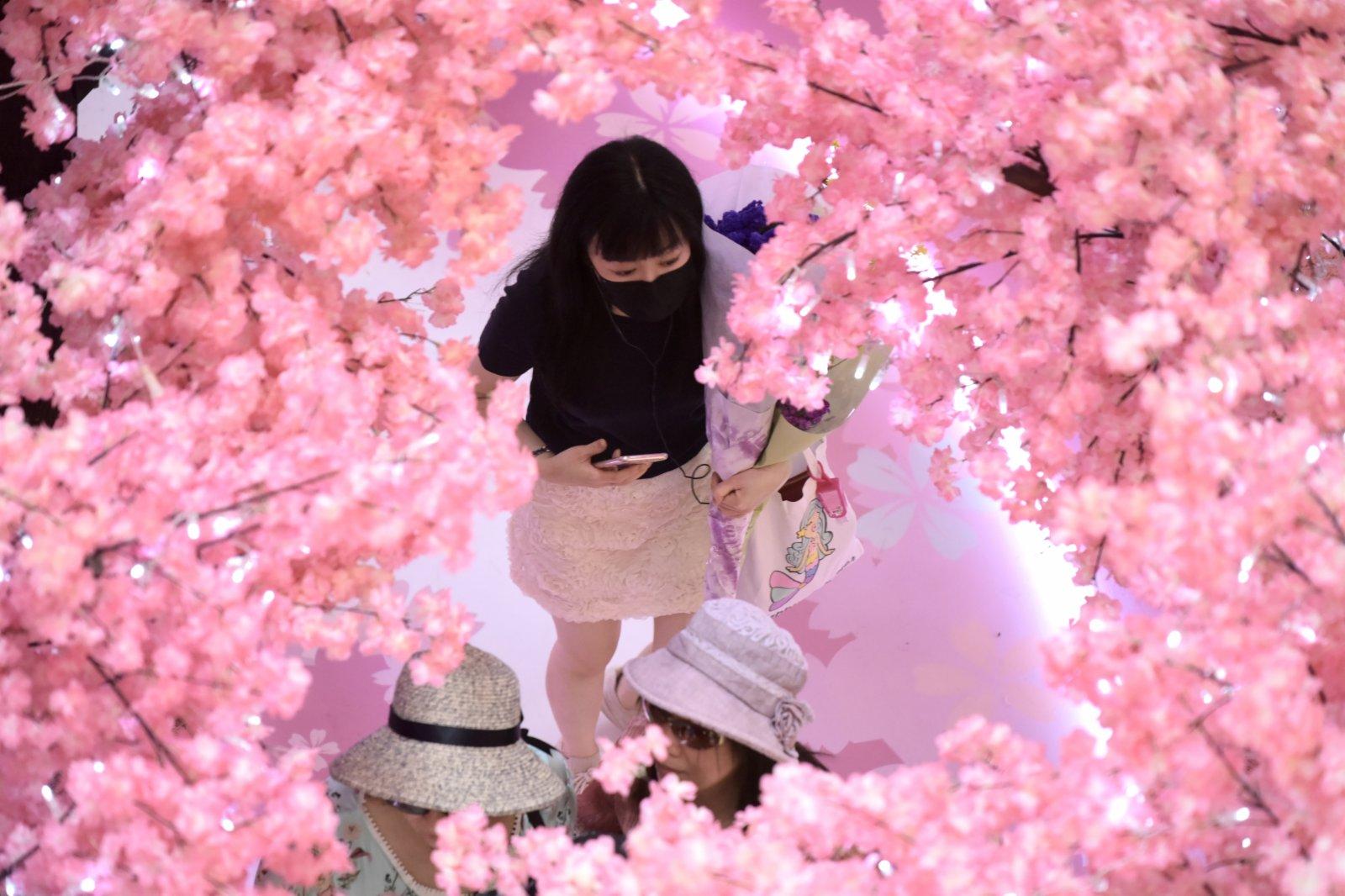 圖為市民置身於「櫻花」叢中。