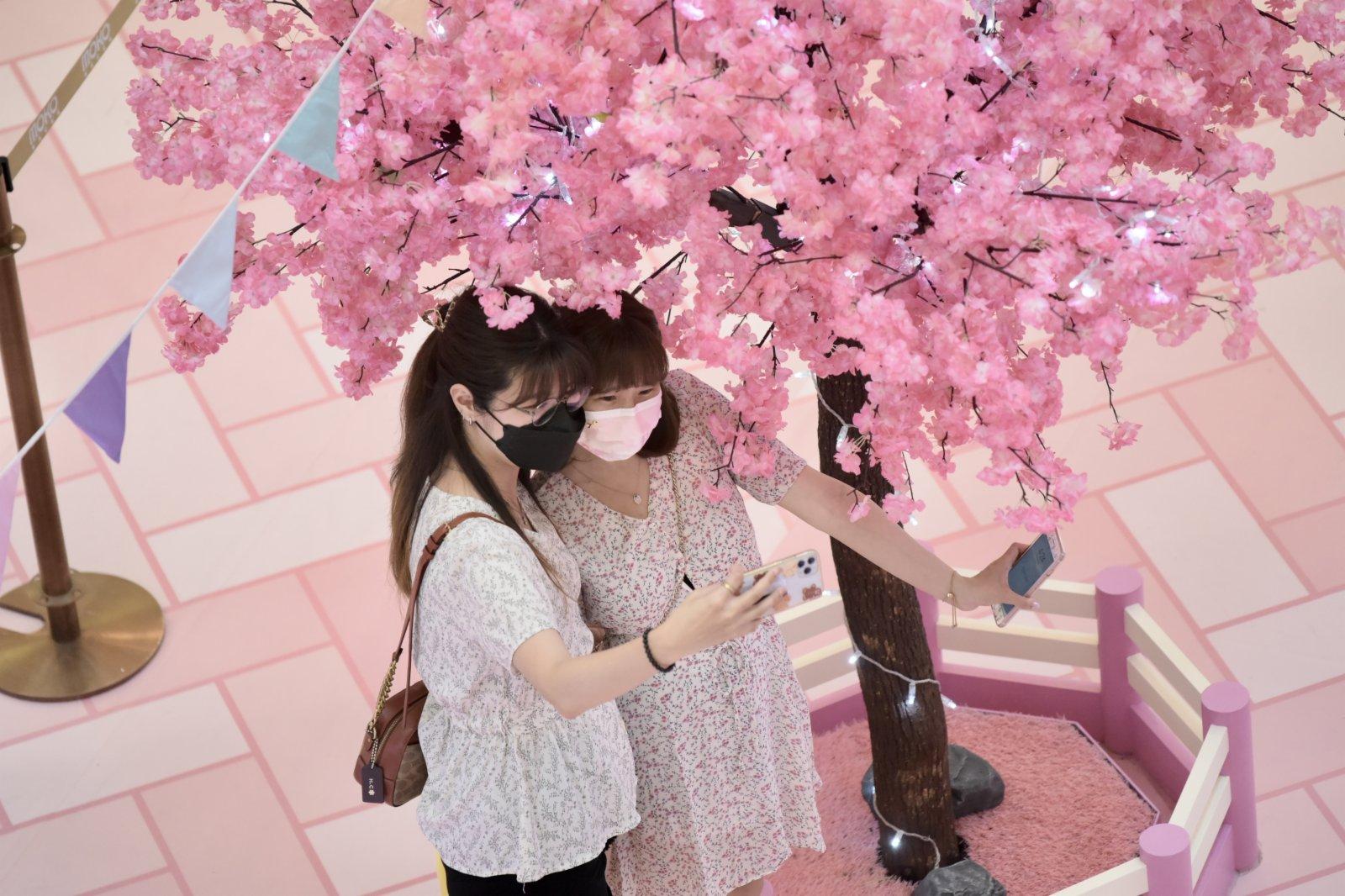 圖為女生與「櫻花樹」合照。