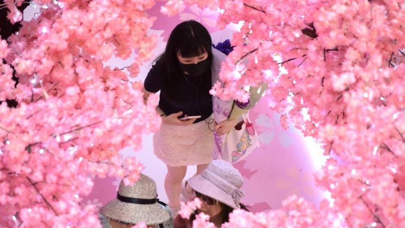 香港市民旺角觀賞迪士尼限定「櫻花」