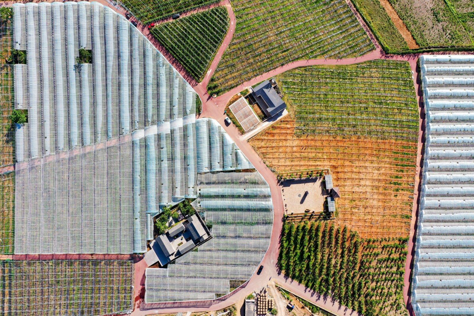 這是6月3日拍攝的河北省遷西縣花鄉果巷田園綜合體果蔬種植大棚(無人機照片)。(新華社)
