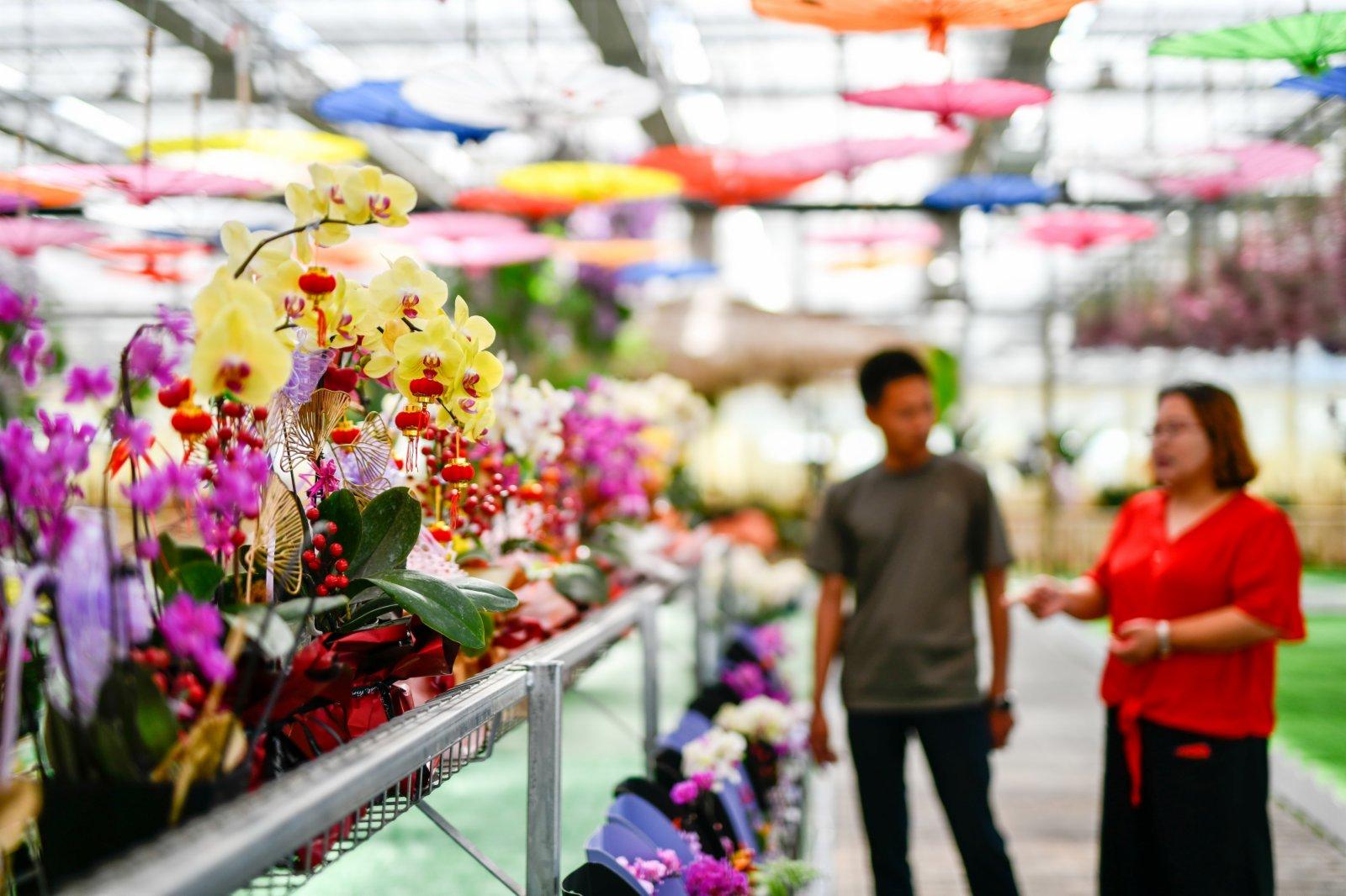 6月3日,在河北省遷西縣花鄉果巷田園綜合體一座智能溫室內,遊客在選購花卉。(新華社)