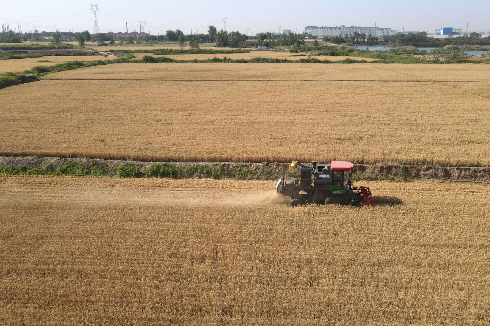 6月6日,農機手操作聯合收割機在河北邢台經濟開發區南陽二村的麥田裡收割小麥(無人機照片)。