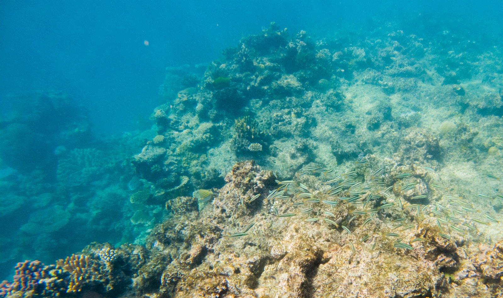 這是6月2日在澳大利亞昆士蘭拍攝的大堡礁海域珊瑚礁。(新華社)
