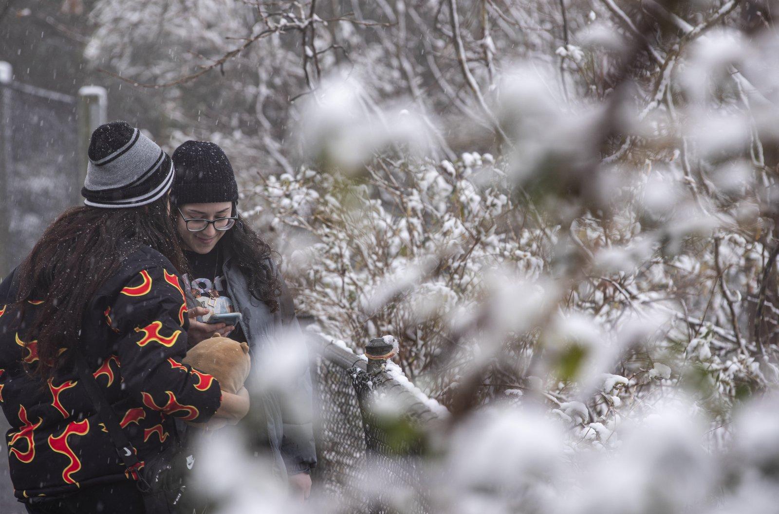 6月10日,人們站在澳大利亞新南威爾士州藍山地區掛滿積雪的植被旁。(新華社)
