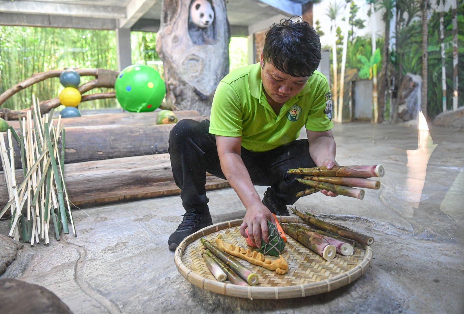 6月14日,在位於海口的海南熱帶野生動植物園,工作人員為大熊貓擺放食物。(新華社)