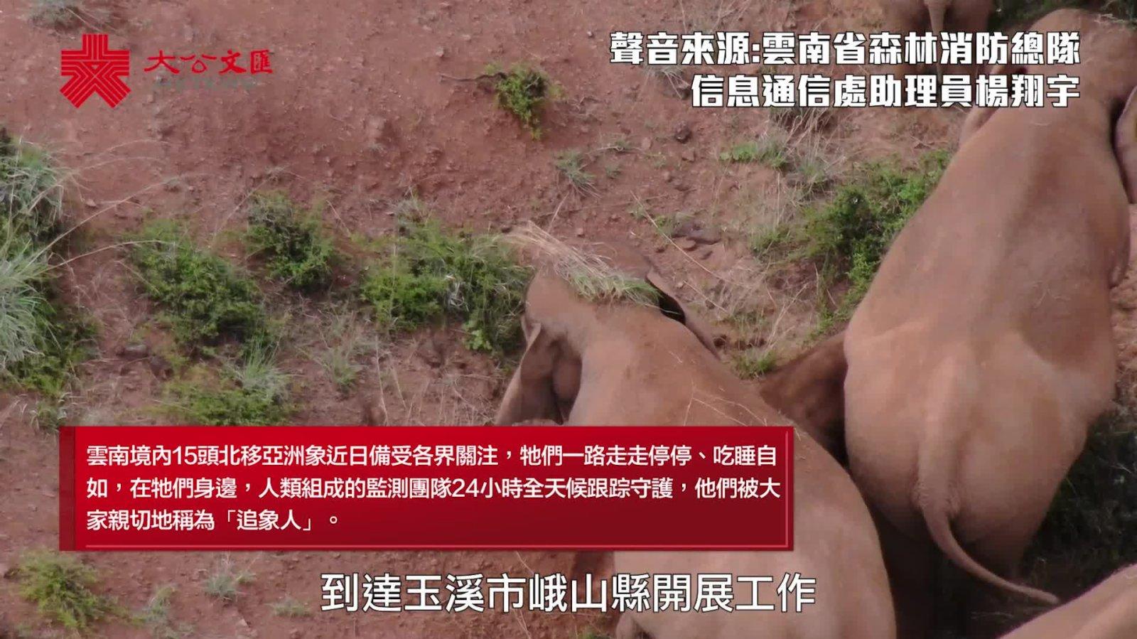 「象動我動,象停我不休」 這群「追象人」24小時隨象而動!