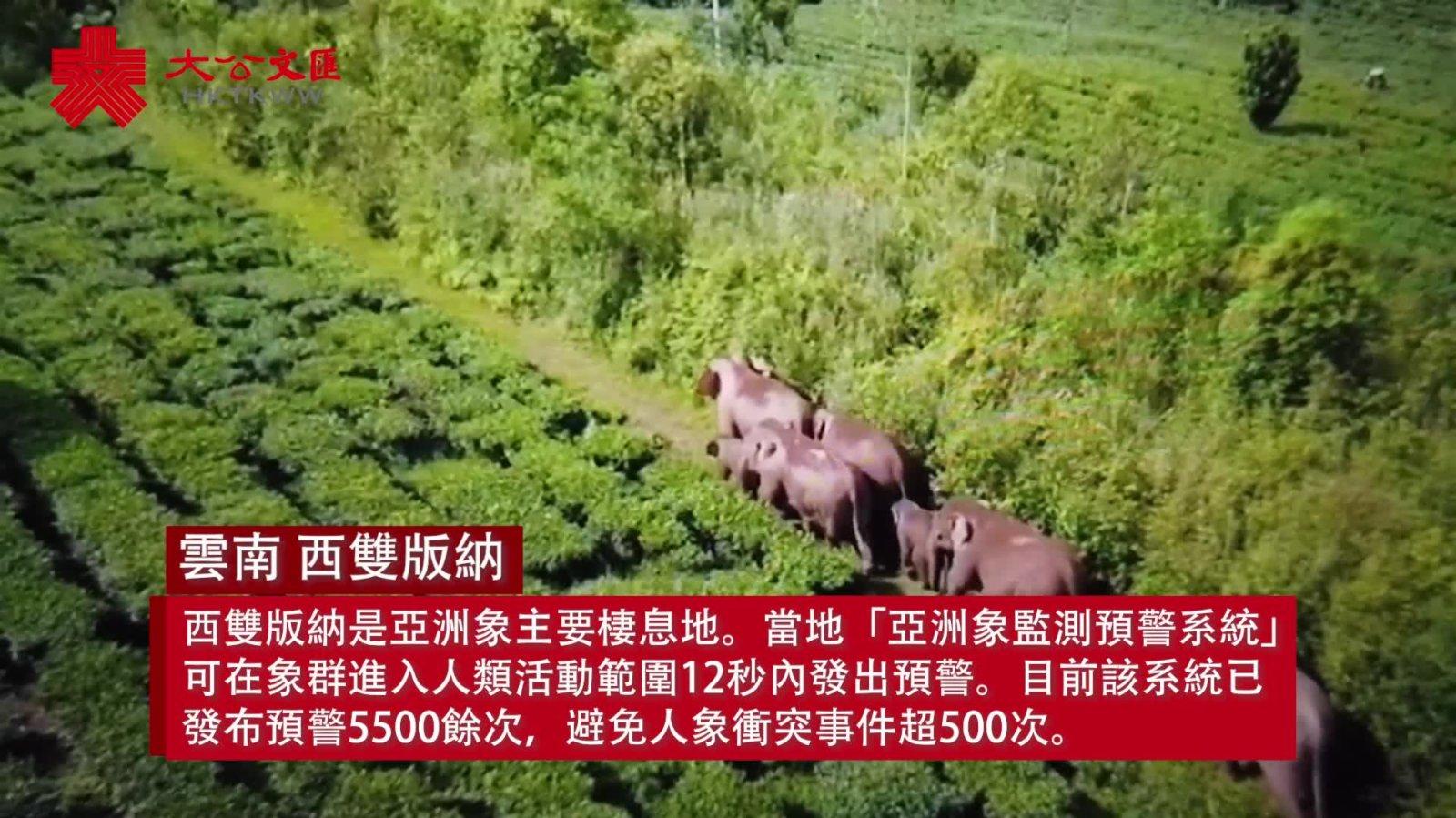 亞洲象出沒12秒預警! 探秘西雙版納「避象神器」