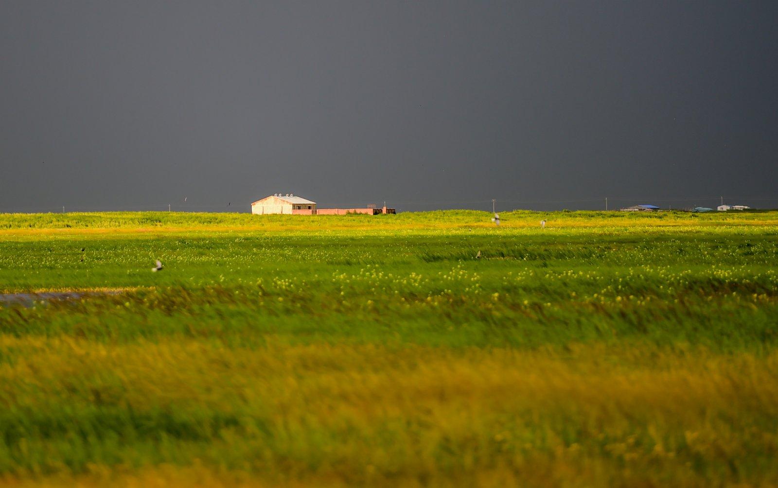 這是陳巴爾虎草原風光(7月22日攝)。(新華社)