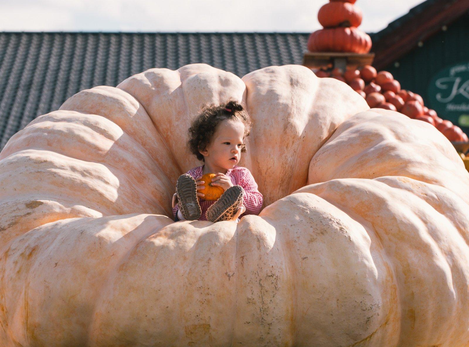 9月12日,在德國洛馬爾傳統南瓜節上,一名兒童在一個巨型南瓜上留影。