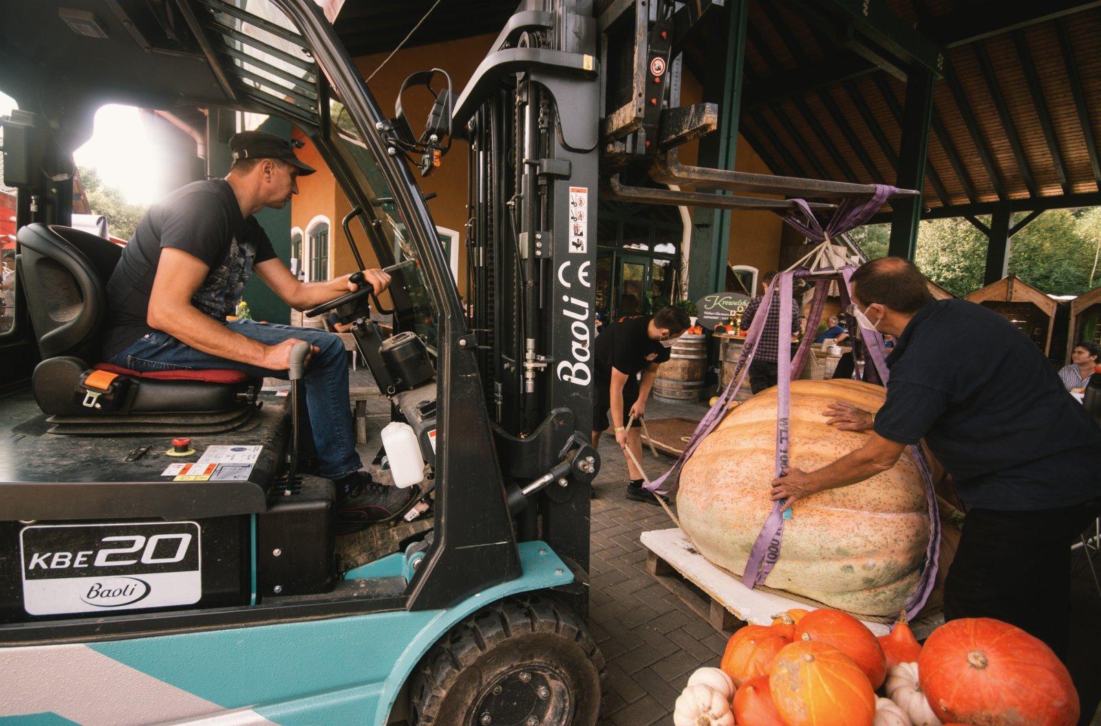 9月12日,在德國洛馬爾傳統南瓜節上,工作人員用鏟車給一個南瓜稱重。