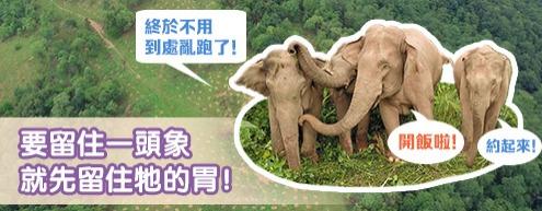 要留住一頭象就先留住牠的胃!