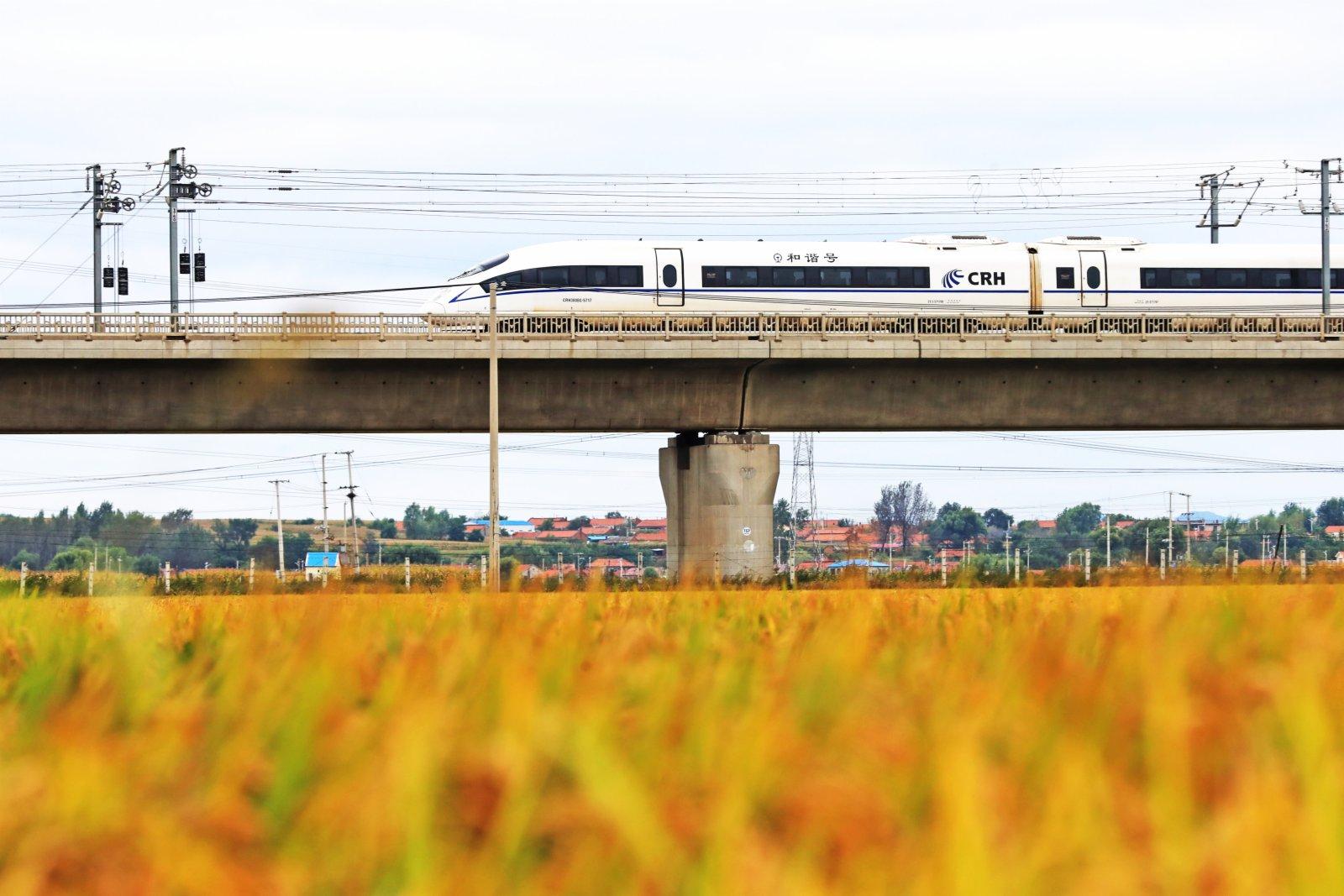 9月22日,在遼寧省鐵嶺縣腰堡鎮,高鐵列車從金色的稻田旁經過。(新華社)