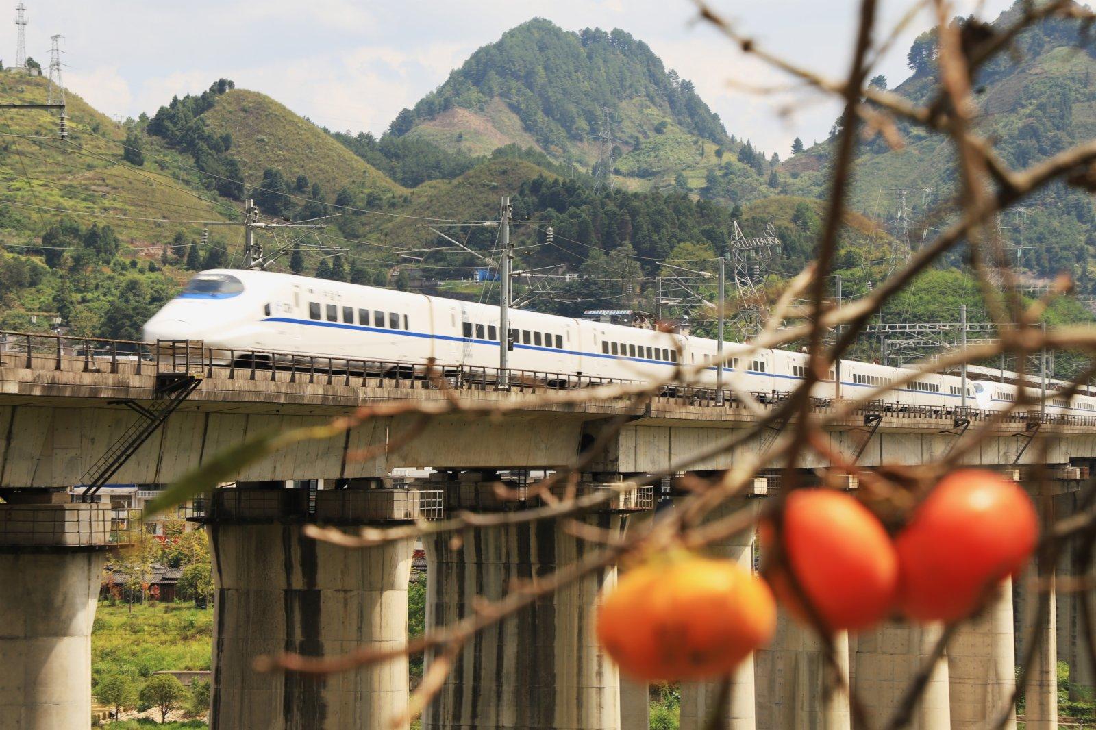 9月22日,動車在貴廣高鐵貴州省三都縣普安鎮段附近行駛,與成熟的柿子相映成景。(新華社)