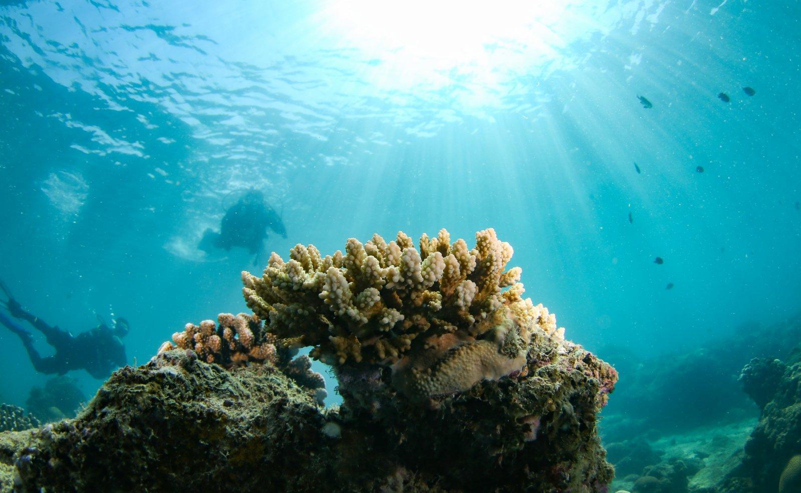 分界洲島海域內的鹿角珊瑚。(新華社)