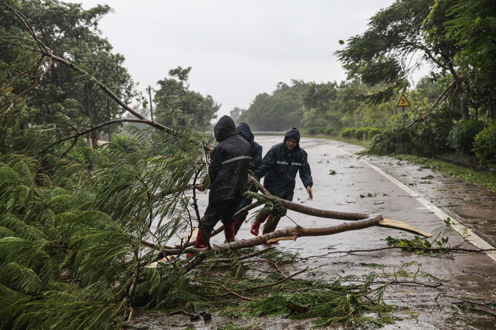 10月13日,在萬寧市山根鎮,工作人員清理倒伏的大樹。(新華社)