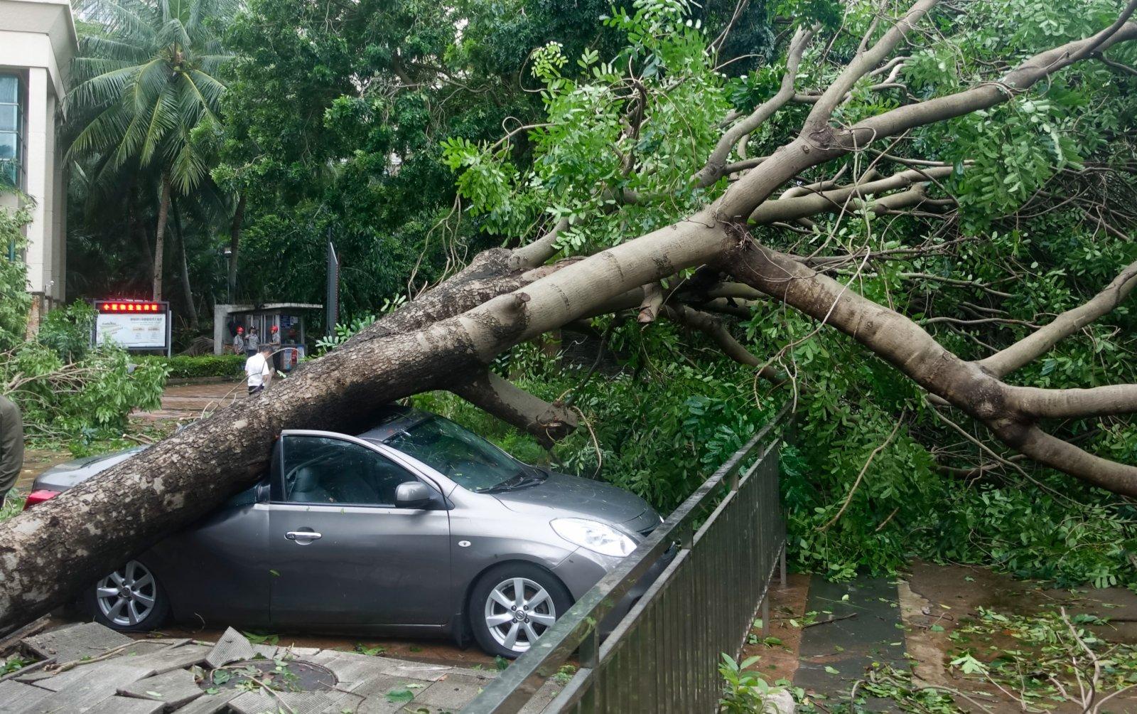 10月13日,在海口世貿雅苑小區,樹木被颱風「圓規」刮倒砸到小汽車。